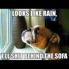 Bulldog Owners Picture Gallery - English Bulldog South Africa