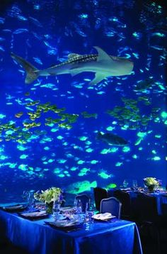 Georgia Wedding Buzz : Host Your Wedding Ceremony and Reception Under the Sea