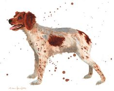 For the special breed lover - do you have a Brittany spaniel? You may love this print for your home! BRITTANY SPANIEL Print Spaniel painting dog art by eastwitching French Brittany Spaniel, Brittany Spaniel Dogs, Dog Lover Gifts, Dog Gifts, Deer Drawing, Watercolor Animals, Watercolour, Animal Magic, Thing 1