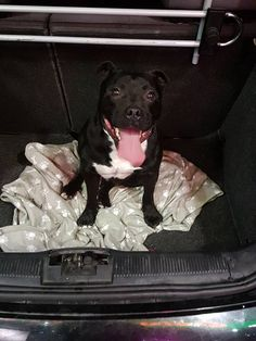DOG FOUND!I found this dog on the Grosvnerfollowing everyone he set eyes…
