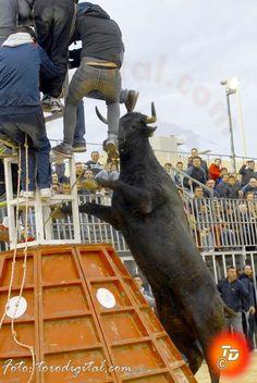 torodigital: Tarde de altos vuelos con el ganado de La Paloma ...
