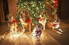christmas tree christmas lights christmas animals christmas pets christmas