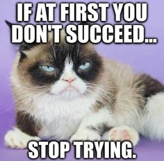 Funny memes humor cant stop laughing people grumpy cat 48 Ideas Grumpy Cat Quotes, Grump Cat, Funny Grumpy Cat Memes, Funny Cats, Funny Memes, Funny Cat Quotes, Cats Humor, Hilarious, Funny Horses