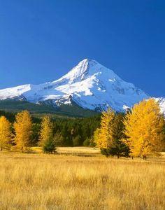 Mt. Hood in autumn splendor