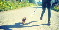 Trucos para educar a un perro a pasear sin tirar de la correa Mini Pinscher, Mundo Animal, Pup, Dogs, Animals, Ideas Para, Tela, Pet Tips, Pet Toys