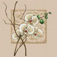 (1) Gallery.ru / Фото #1 - Orchidea - zuzas
