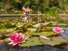 Enjoy the tranquil Sunken Garden, hidden in the Italian Garden at Hever Castle #gardening #lilies