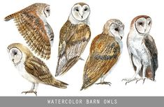 Watercolor Barn Owls by YesFoxy on Watercolor Barns, Owl Watercolor, Watercolor Texture, Watercolor Animals, Business Illustration, Pencil Illustration, Watercolor Illustration, Graphic Illustration, Illustrations