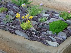 Discover+the+best+succulents+for+an+in-ground+trough+filled+with+slate+chips+at+HGTV.com.
