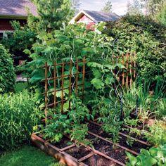 close quarters edible garden  27-12 - Anderton_Yannow_2.jpg