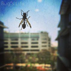 Bug's Life #bug #window #campus #lazyday #bluesky #insect #deepstudio #enlightapp #mobilephotography #shotfromiphone6 www.deep.studio