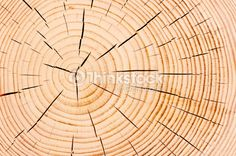 Stock Photo : annual tree rings, fine texture closeup Tree Rings, Abstract Photos, Close Up, Texture, Stock Photos, Soaps, Image, Surface Finish, Hand Soaps