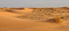 Desiertos Y Semidesiertos