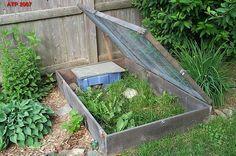 outdoor tortoise enclosure - for Flash