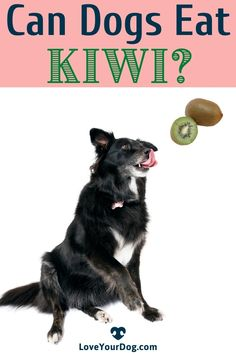 Can dogs eat kiwi? Yes they can! However, you'll want to feed it to your pup safely to avoid any blockages or upset stomachs. Read on to find out more! #LoveYourDog #CanDogsEatKiwi #WhatCanDogsEat #DogNurtrition #DogFood #DogHealth Can Dogs Eat, R Dogs, Dog Information, Dog Eating, Kiwi, Fun Activities, Dog Food Recipes, Your Dog, How To Find Out