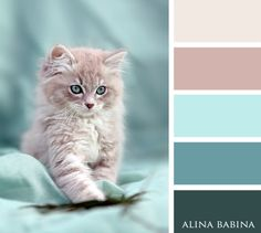 The colours or the kitten? Scheme Color, Color Schemes Colour Palettes, Pastel Colour Palette, Colour Pallette, Pastel Colors, Color Combos, Color Blending, Color Mixing, Beautiful Color Combinations