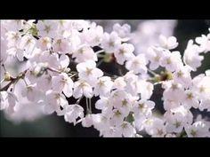 에피톤 프로젝트 (Epitone Project) - 봄날, 벚꽃 그리고 너.flv