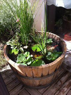 1000 images about petit bassin tonneau on pinterest for Decoration jardin tonneau