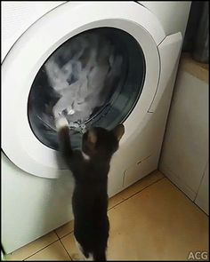 ACG • Funny Kitten going nuts trying to catch clothes in the washing machine