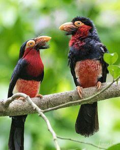 Happy couple Exotic birds