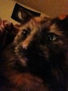 My sweet Ferral kitty Callie