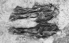 Isotope analysis reveals diet of beheaded Viking slaves In the Viking era, a number of slaves were beheaded and then buried together with their masters. New methods of skeleton analysis reveal more about the life of the poor more than a thousand years ago.