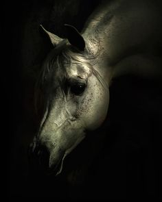 Arabian horse head Photo by Wojtek Kwiatkowski