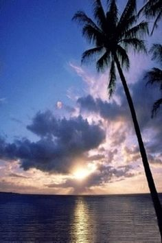 Palm Tree Beach Sunset   Palm Tree Sunset Beach Live Wallpaper is a Beautiful Sunset scape ...