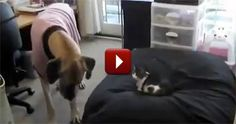 This is the Hilarious Reason Why Cats and Dogs Don't Get Along - LOL, Too Funny!