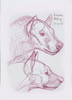 Mauricio Anton | Adcrocuta was a true hyena, and its size and proportions look far more familiar to a modern observer. The Hezheng skulls define the shape of the animal´s head admirably well, and allowed me to prepare a series of quick sketches of its possible life appearance.