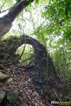 Hiking through the bush on the Caribbean Island of Nevis-discover many old ruins