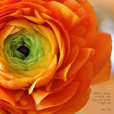 Beauty!  Camillia of orange and green