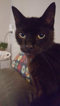 """Mijn 10-jarige kat Kareltje, die hier meesterlijk toont waarom hij """"Kleintje"""" wordt genoemd!"""