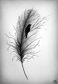 Image result for drawn feather