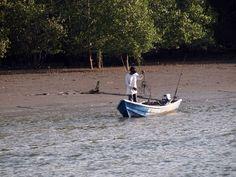 Santubong Mangroves Swamps River Cruise – Kuching