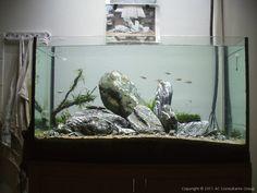 slate aquarium - Google Search Goldfish Aquarium, Slate, Google Search, Chalkboard