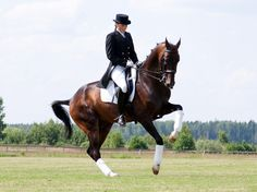 Dressage.... simply amazing