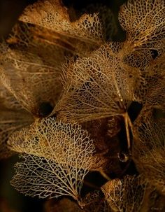 Leaf Skeletons: The antique Art of skeletonizing leaves was understood and practised by the Chinese during the Ming Dynasty. Patterns In Nature, Textures Patterns, Leaf Skeleton, Dame Nature, In Natura, Seed Pods, Natural Forms, Land Art, Wabi Sabi