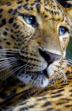 Wild life: Cute Animal