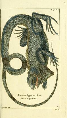 Bd.4 [plates] (1783) - Gemeinnüzzige Naturgeschichte des Thierreichs : - Biodiversity Heritage Library