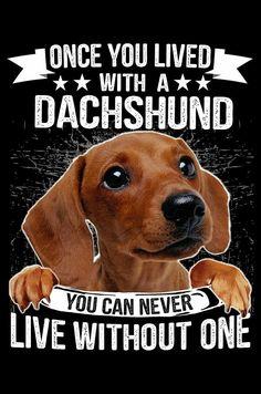 Dachshund Quotes, Mini Dachshund, Dachshund Puppies, Dachshunds, Black Dachshund, Dapple Dachshund, Daschund, Weenie Dogs, Doggies