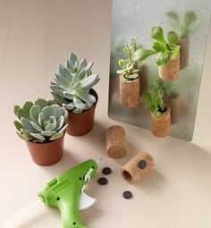 Why toss the wine corks when you can instead transform them into adorable miniature planters, complete with live greenery? Making these cute refrigerator magnets is simple and quick and you likely have most of what you need on hand already.