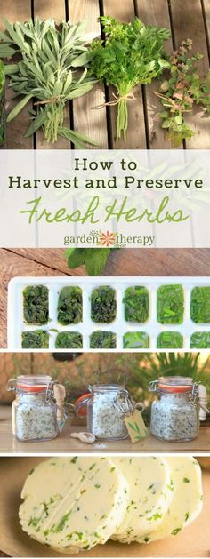 How to Harvest and Prepare Fresh HerbsYou can find Harvesting herbs and more on our website.How to Harvest and Prepare Fresh Herbs Healing Herbs, Medicinal Herbs, Aromatic Herbs, Preserve Fresh Herbs, Freezing Fresh Herbs, Herb Garden Design, Herbs Garden, Garden Ideas, Types Of Herbs