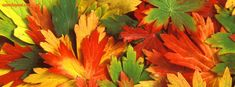 Autumn Fall Pile Of Leaves facebook cover   CoverLayout.com