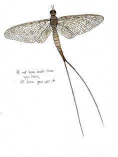 Some great illustrations and quotes by a Cumbrian artist #inspirational quotes #mayflies