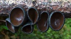 Resultado de imagen para fotos hongos extraños