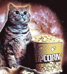 [Obrazek: 0260b2d72d3b31bf50705d294dceed4e--evil-c...y-cats.jpg]