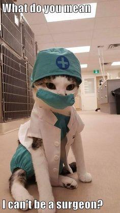 Please check my heart doctor - your daily dose of funny cats - cute kittens - pet memes - pets in clothes - kitty breeds - sweet animal pictures - perfect photos for cat moms Cute Funny Animals, Funny Animal Pictures, Cute Baby Animals, Funny Cats, Hilarious Pictures, Silly Cats, Random Pictures, Baby Pictures, Funny Photos