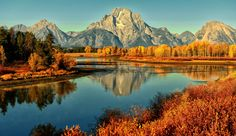 """Golden Morning at the Bend by © Jeff R. Clow > The aspens are all native to cold regions with cool summers, in the north of the Northern Hemisphere, extending south at high-altitude areas such as mountains or high plains. They are all medium-sized deciduous trees reaching 15–30 m (49–98 ft) tall. In North America, it is referred to as Quaking Aspen or Trembling Aspen because the leaves """"quake"""" or tremble in the wind. This is due to their flattened petioles which reduces aerodynamic drag on…"""