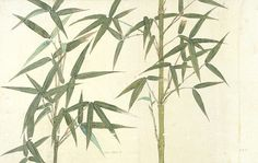 Murals of Drawing of Bamboo by V&A (3000mm x 2400mm)   Shop   Surface View